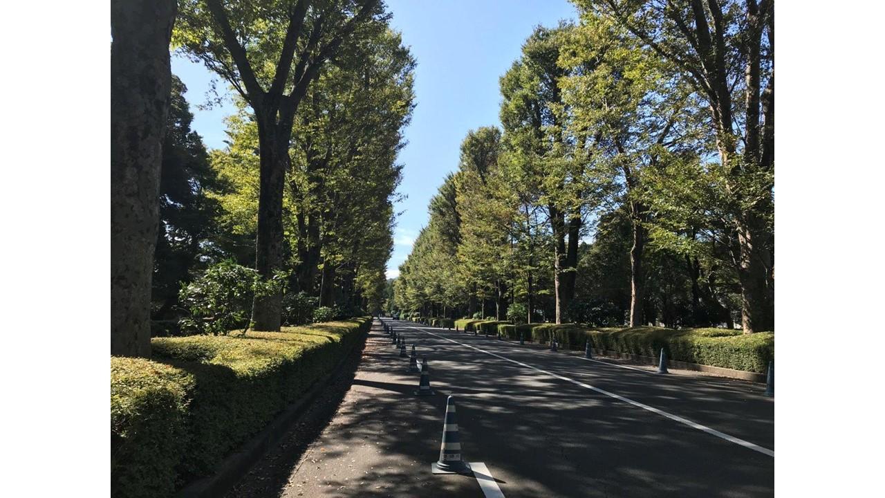 武蔵陵墓地へ向かい道ケヤキ並木