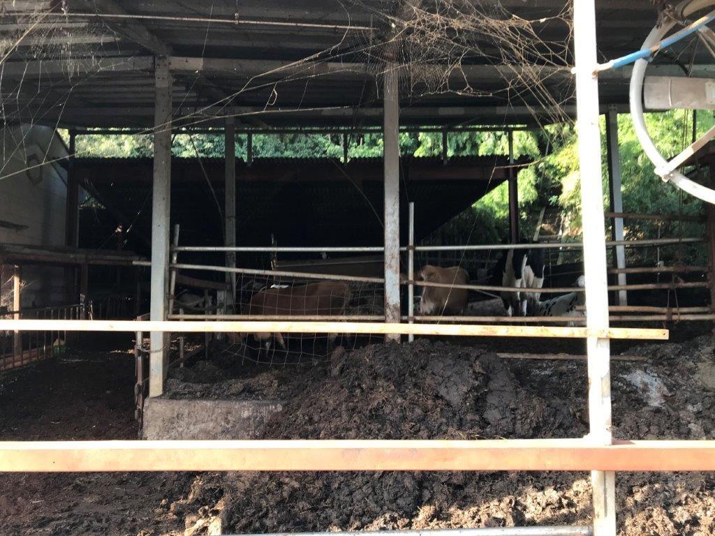 育成舎の牛達