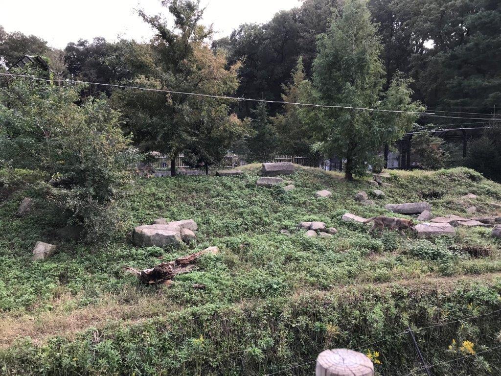 オオカミ飼育舎全景