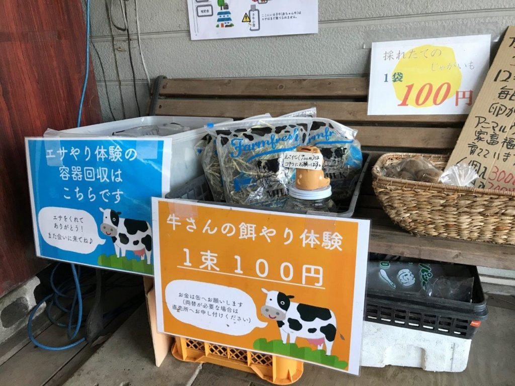 牛さんの餌やり体験